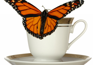 China Cups and Butterflies; Options and Ethics